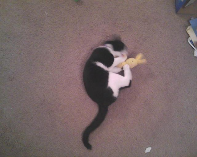 cat playing with bunny soaked in catnip