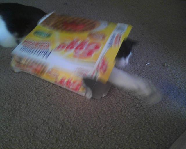 cat in eggo box with blue ball