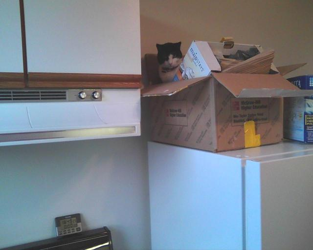 cat on box on fridge