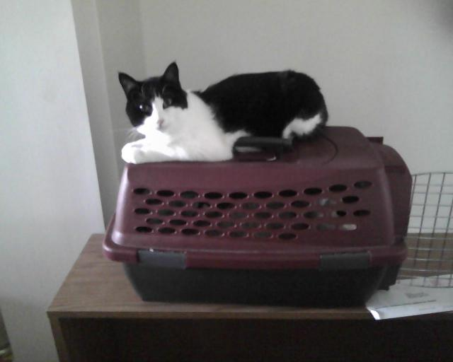 Parker sitting on her cat carrier
