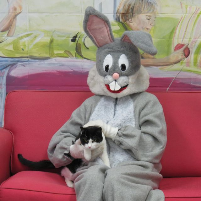 black and white cat with Easter bunny on red couch