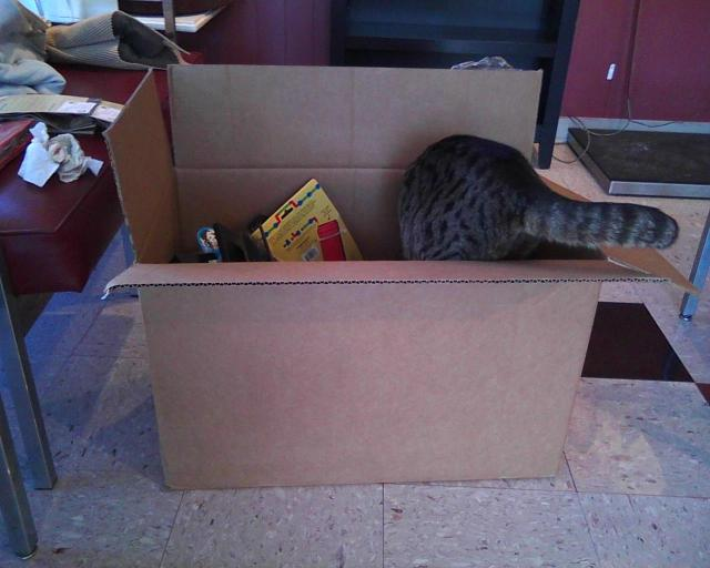 tabby cat in box