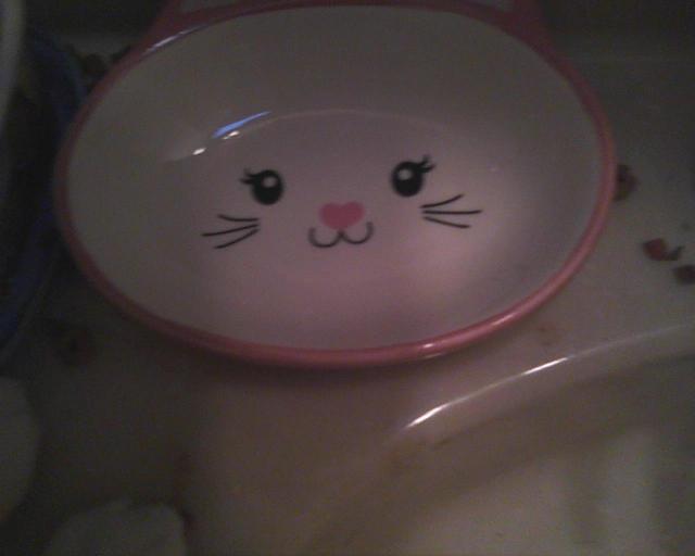 new kitty dish