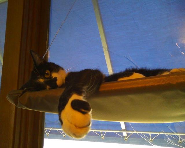 tuxedo cat in window seat