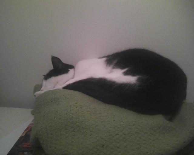 cat on blanket on closet shelf