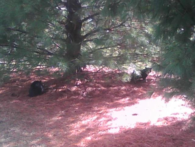 cats under pine tree