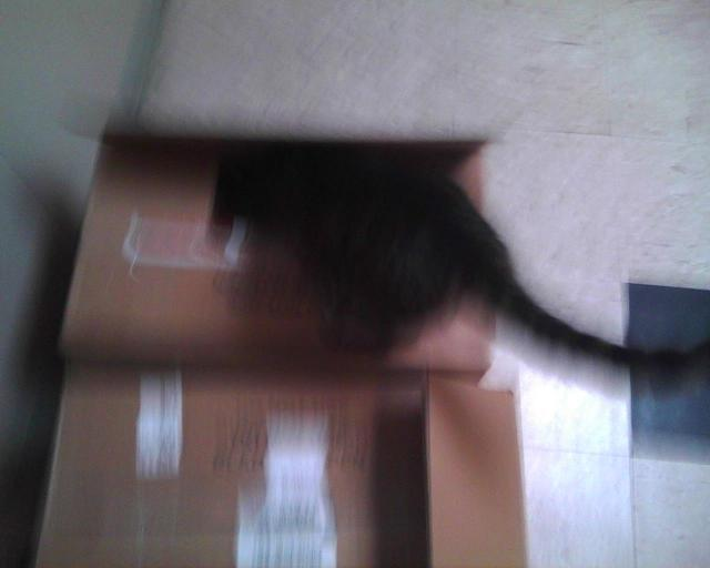 cat getting into a box