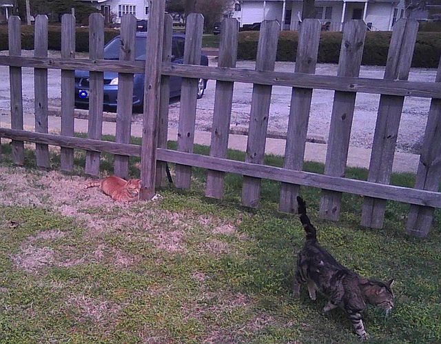 Bob and Shtinky by the post where the mouse is hiding