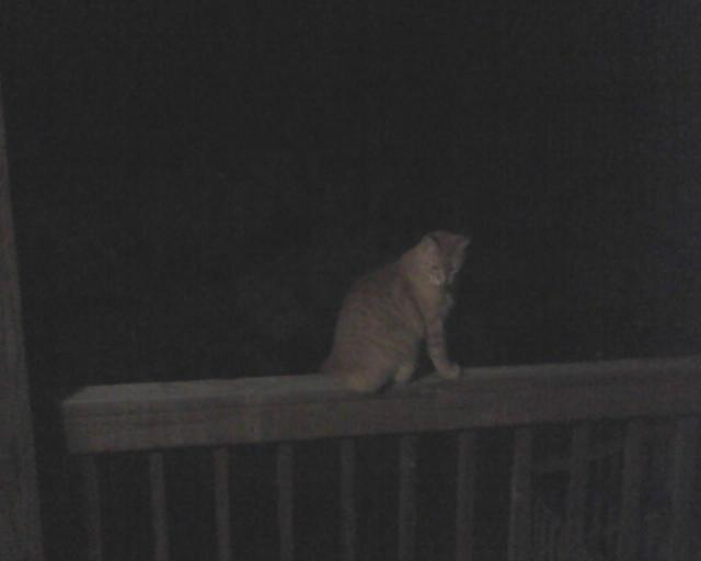 Bob after dark on railing