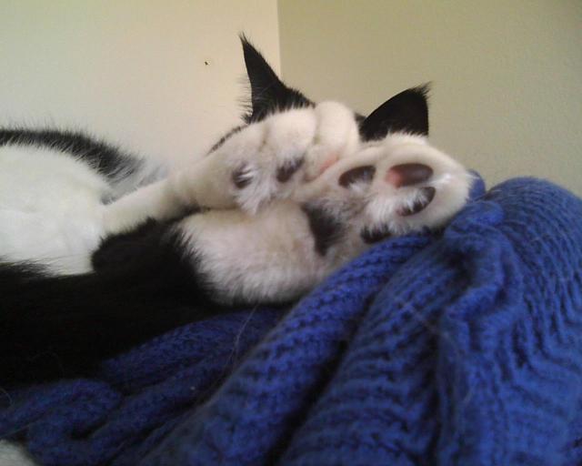 kittytoes ! asleep on the shelf
