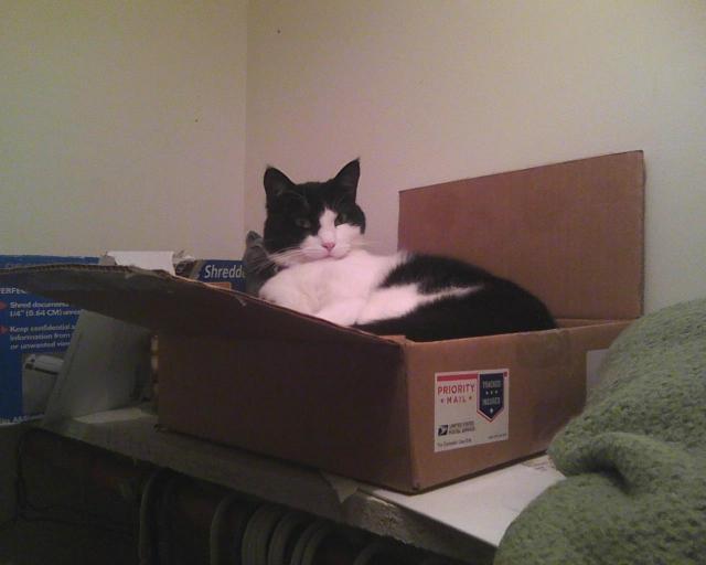 sitting in a box on a shelf