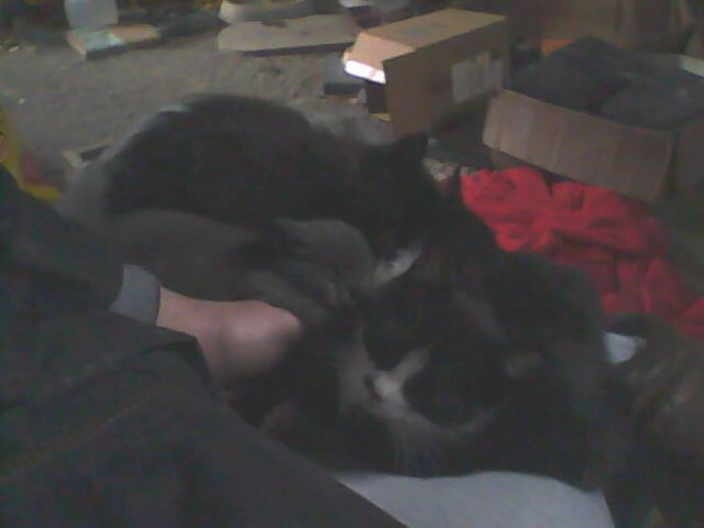 five kittens sleeping on lap
