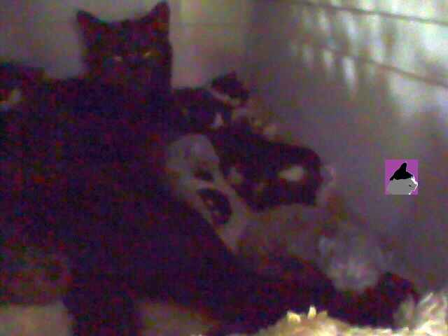cat and kittens in cat carrier