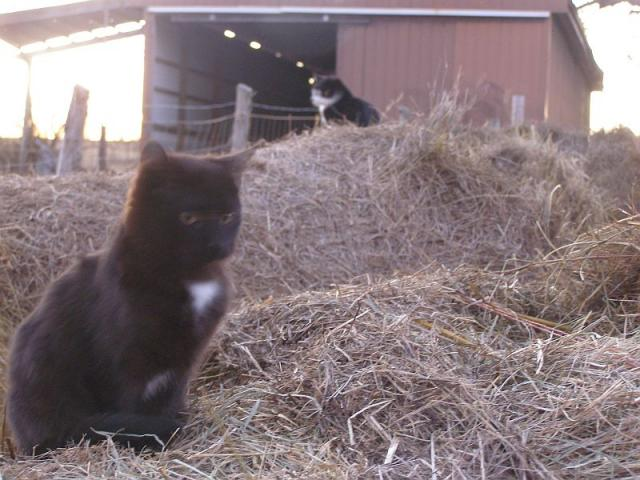 two cats on hay bales