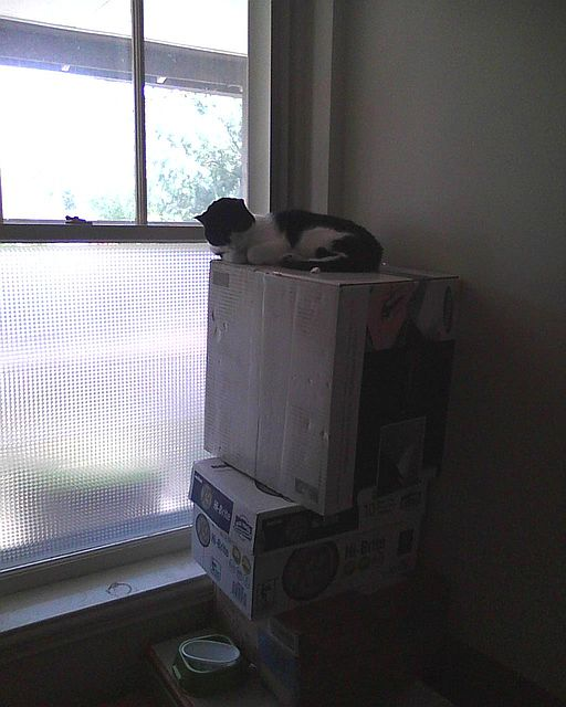 cat sitting on a box tower