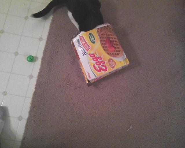 cat looking for green ball in box