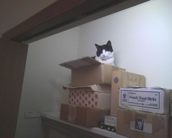 cat in a box on a shelf
