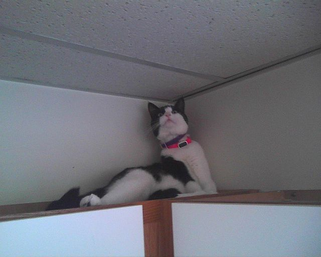 cat in corner of room
