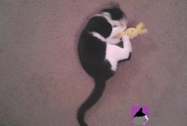 cat playing with catnip bunny