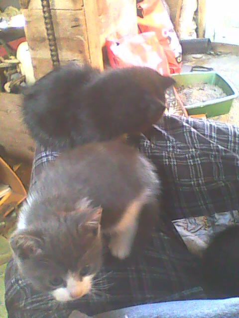 two kittens on one side of a lap