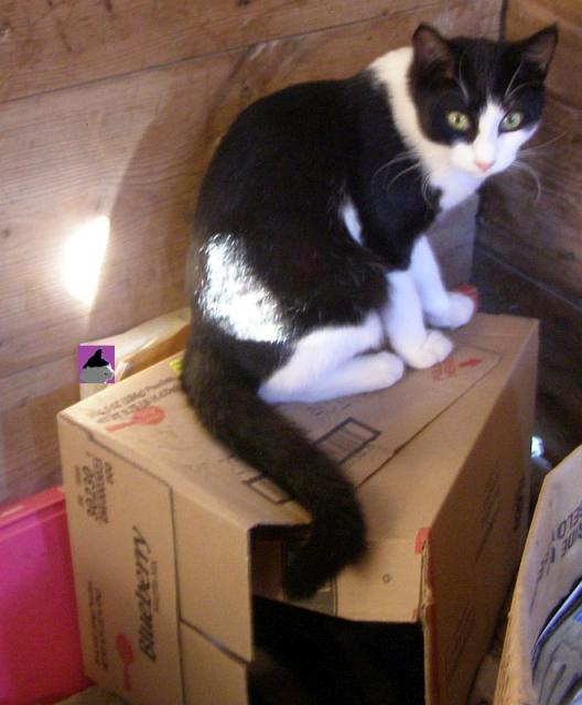cat on top of box