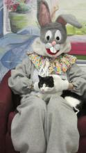 tuxedo cat sitting on the lap of the Easter Bunny