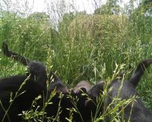several cats in tall grass