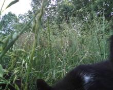 cat in tall grass