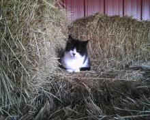 cat sitting on square hay bales