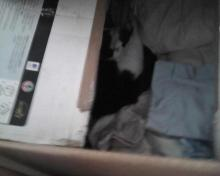 cat hiding in a box of linens