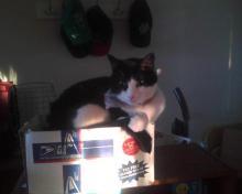 cat on sunny box