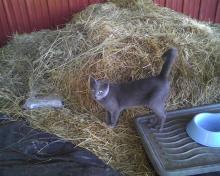 farm cat and dinner dish