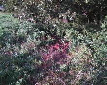 weeds around cat's grave