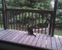 tabby cat on the porch