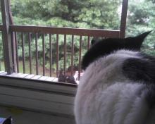 cat in window watching cat on porch
