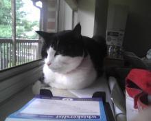 kitty loaf in window.