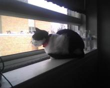 cat looking out a different window