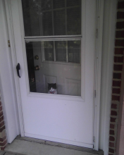 cat looking out screen door