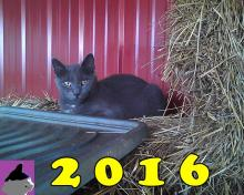 Gray cat wishing us a happy new year