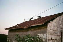 three cats on shed roof