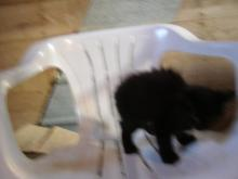 blurry black kitten