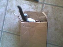 cat exploring long box