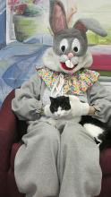 Cat with easter bunny again