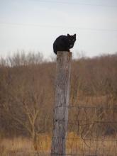 Black cat on a post