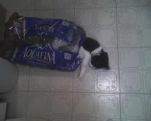cat playing in case of water bottles
