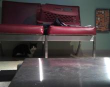 cat hiding under couch in vet office