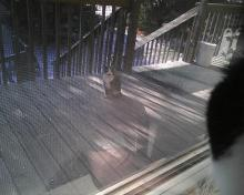 Cat on the porch