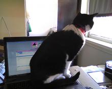 cat sitting on computer