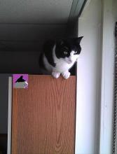 cat on cupboard