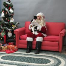 cat with Santa Paws